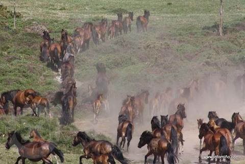 Infominho - Este domingo celébrase na Valga-Loureza o segundo curro da tempada o -Curro das moscas- - INFOMIÑO - Informacion y noticias del Baixo Miño y Alrededores.
