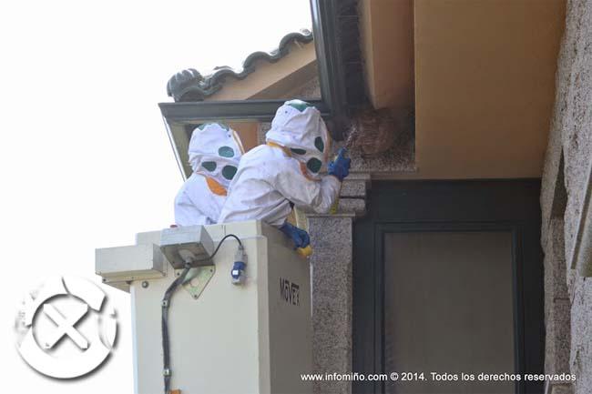 Infominho -  O Concello do Rosal xa retirou 73 ni�os de vespa velutina no 2016 - INFOMI�O - Informacion y noticias del Baixo Mi�o y Alrededores.