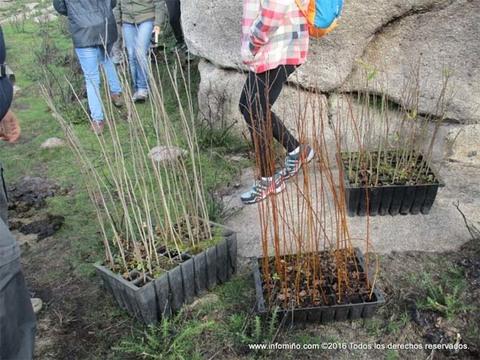 Infominho - O proxecto -Pranta unha arbore, pranta futuro- engadirá 200 prantas autóctonas ó Monte Sta. Trega - INFOMIÑO - Informacion y noticias del Baixo Miño y Alrededores.