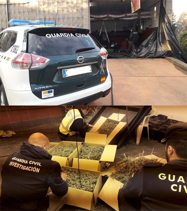 Infominho -  La Guardia Civil desmantela un invernadero  de marihuana en O Rosal - INFOMIÑO - Informacion y noticias del Baixo Miño y Alrededores.