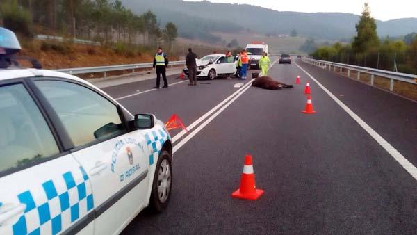 Infominho -  Accidente en O Rosal al colisionar un turismo y un caballo en el Vial A Guarda-Goián - INFOMIÑO - Informacion y noticias del Baixo Miño y Alrededores.