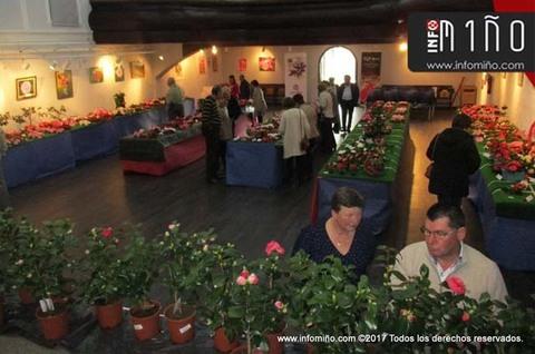 Infominho - Especial - Tomiño acogió este fin de semana el VIII Concurso Exposición de la Camelia - INFOMIÑO - Informacion y noticias del Baixo Miño y Alrededores.