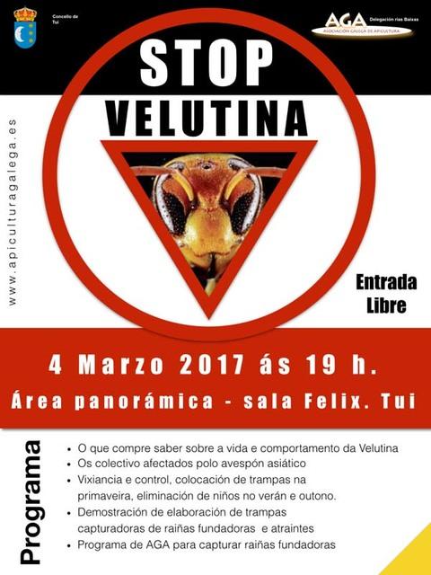 Infominho - A Sala Félix de Tui acolle este sábado unha charla informativa sobre a vespa velutina - INFOMIÑO - Informacion y noticias del Baixo Miño y Alrededores.