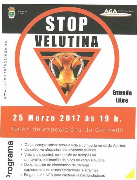 Infominho - O Concello do Rosal acolle este sábado a Xornada Stop Vespa Velutina - INFOMIÑO - Informacion y noticias del Baixo Miño y Alrededores.