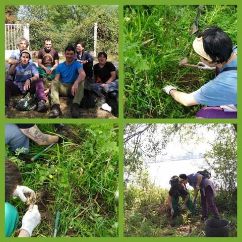 Infominho - O Concello de Tomiño contrata catro persoas desempregadas para controlar a flora exótica invasora na ribeira do Miño  - INFOMIÑO - Informacion y noticias del Baixo Miño y Alrededores.