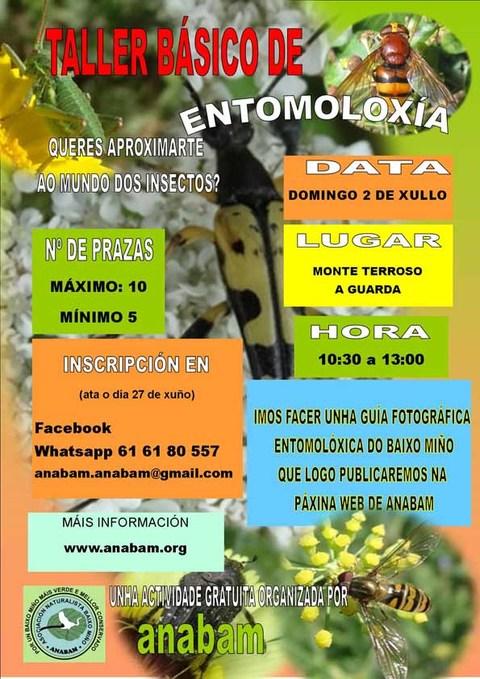 Infominho - Taller básico de entomoloxía o 2 de xullo na Guarda - INFOMIÑO - Informacion y noticias del Baixo Miño y Alrededores.