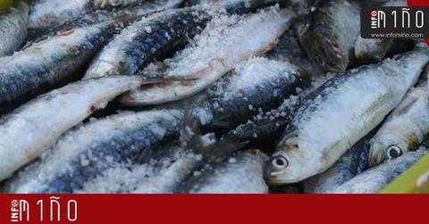 Infominho - Aumenta la demanda y el precio de la sardina ante la celebración de la festividad de San Juan en Galicia - INFOMIÑO - Informacion y noticias del Baixo Miño y Alrededores.