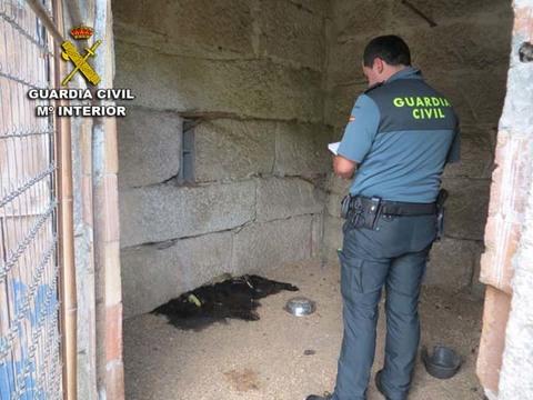 Infominho - La Guardia Civil investiga a un vecino de Tui por un presunto delito de maltrato animal - INFOMIÑO - Informacion y noticias del Baixo Miño y Alrededores.